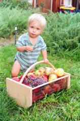 Paonia Organic Fruit
